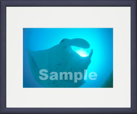 B2543_046-DP-StainBl.jpg